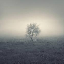 Mistery Tree by leenik