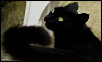 Black cat by bheware