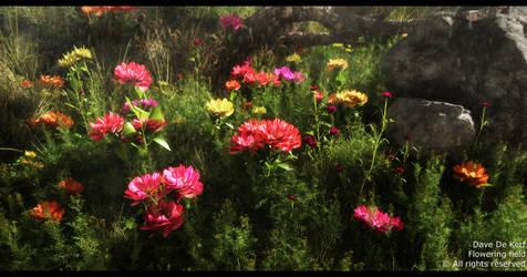 Flower Field by Dave-DK