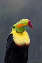 stoic in rain by WildGepard