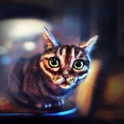 171202 Cat by Foxeus