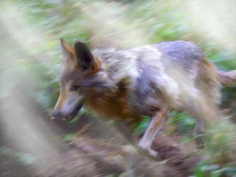Wolf Woods by Sarenea