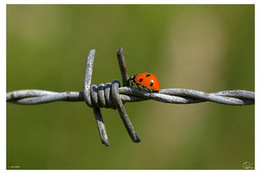 on wire... by oetzy