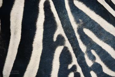 Stripes by Daduunka