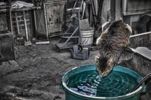Thirsty Cat by DorianOrendain
