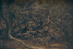 Trees by DorianOrendain