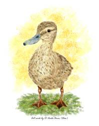 The Mama Duck by missykanga