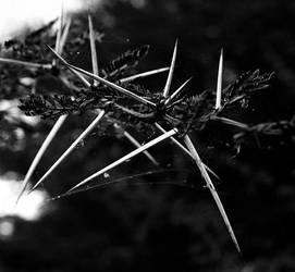 thorns by papashillingi