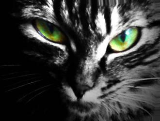 cato1 by papashillingi