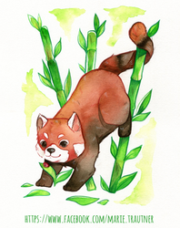red panda by horror-child