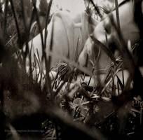 Dans l'herbe by Anemiasymptom