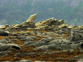 Low tide by LucieG-Stock