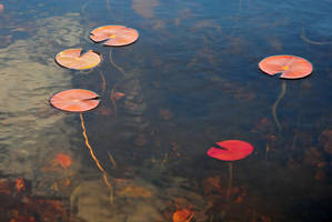 lillypads 2 by LucieG-Stock
