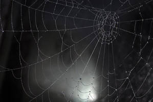 web 1 by LucieG-Stock