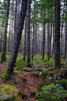 forest scene by LucieG-Stock