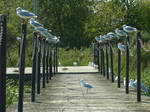 Seagull airport by glanthor-reviol