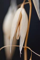 Grass Seed by halfhandau
