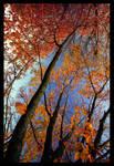Demeure d'automne by ctrc
