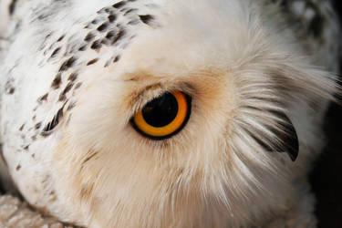 Snowy Owl by BloodsInk