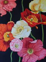 Original Poppy by AnneGoodall