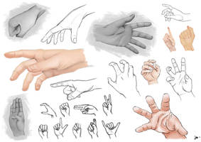 Study - Hands by Rammoth