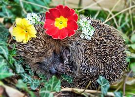 Hedgehog Fashion by Bootcoot