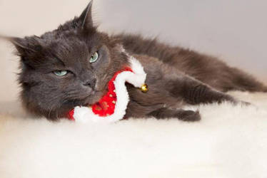 Christmas Kitty by bobyn