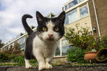 Close up cat on the street by OceansCurse