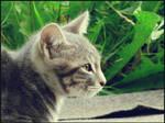 Meow by Azette