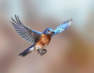 Bird Study (Day 38/365) by JamesExcalibur