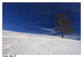 Winter shot: a lonely tree by fabula-docet
