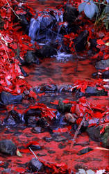 And Within Red. A River. by Aenea-Jones
