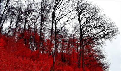 Bloodred Forest III by Aenea-Jones