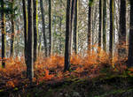 Flames of Autumn by Aenea-Jones