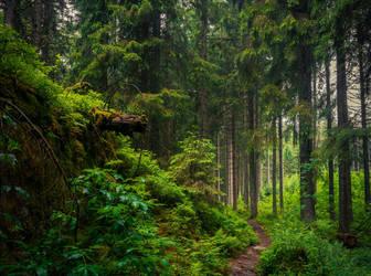 Forbidden Woods by Aenea-Jones