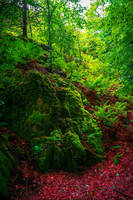 Mossy Rock by Aenea-Jones