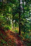 Forest Trail II by Aenea-Jones