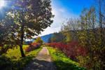 Early Autumn II by Aenea-Jones