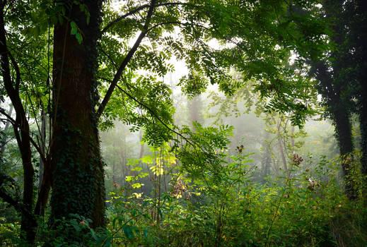 Foggy Morning VII by Aenea-Jones