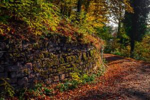 Overgrown Wall by Aenea-Jones