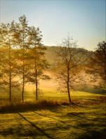 Golden Morning III by Aenea-Jones