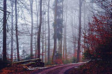 Lost in the Woods II by Aenea-Jones