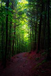 Deep in the Woods IV by Aenea-Jones