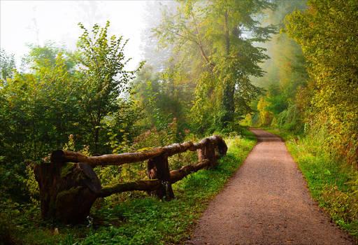 Foggy Morning X by Aenea-Jones