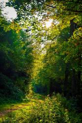 Light, forerunner of spring. by Aenea-Jones