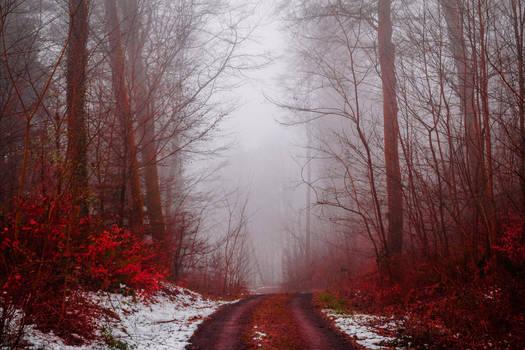 Bloodred Forest VIII by Aenea-Jones