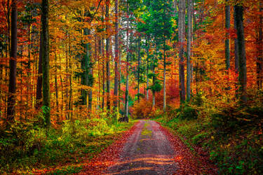 Autumn Colors by Aenea-Jones