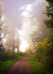 Foggy Morning XIII by Aenea-Jones
