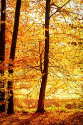 Autumn Magic III by Aenea-Jones