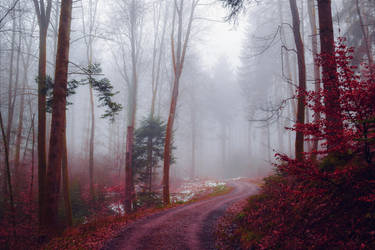 Bloodred Forest IX by Aenea-Jones